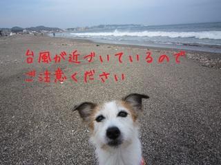20141013165925.JPG