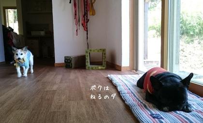 2017613145537.JPG