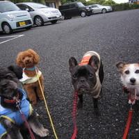 ★お散歩4ぴきのサムネイル