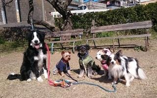 大型犬のマナー