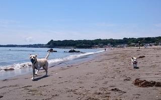 海岸トレーニングとお散歩トレーニング