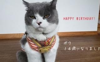 にゃん吉14歳