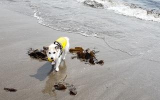 楽しい水遊び