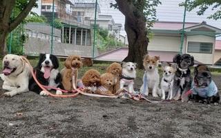 小型犬から大型犬まで勢ぞろい