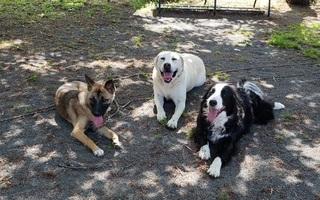 大型犬の社会化